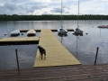 Float docks access ramp Birchdog